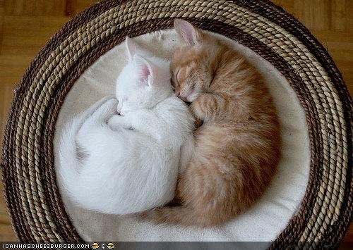 cyoot kitteh of teh day,sleeping,spooning,two cats