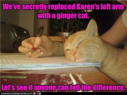 arm,caption,captioned,cat,difference,experiment,ginger,left,replaced,secretly,tabby