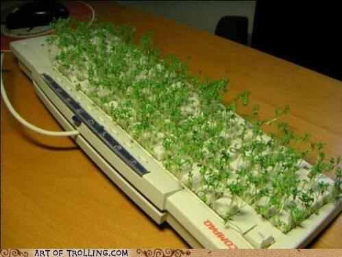 Growing,IRL,keyboard,sprouts