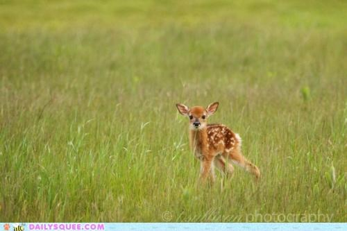 baby beautiful comparison deer endearing fauna fawn flora Hall of Fame interesting pun - 5123161088