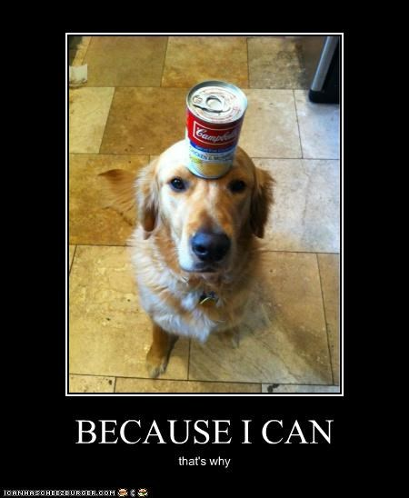 animals,because I can,because of reasons,cans,dogs,i has a hotdog,soup,thats-why
