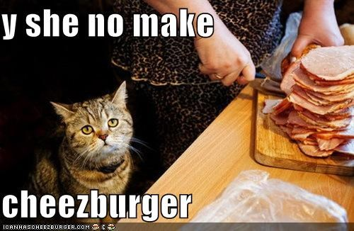 Cheezburger Image 5124522496