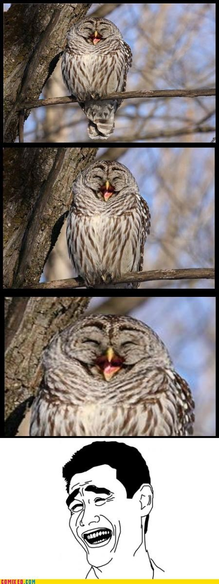 animals laugh mouth Owl rage face - 5124943360