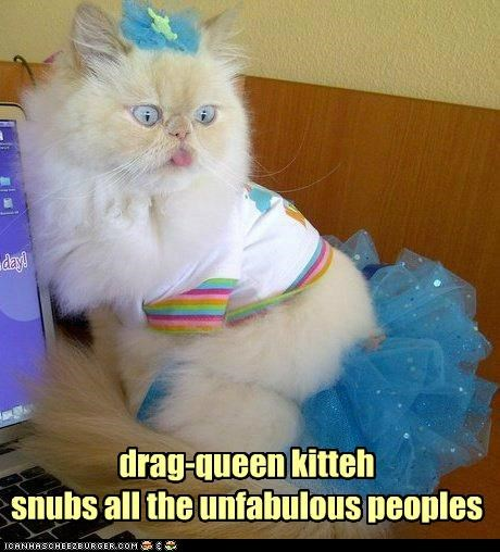 bow caption captioned cat costume drag queen dressed up fabulous fashion Hall of Fame not people skirt snob snubs tutu - 5125184512