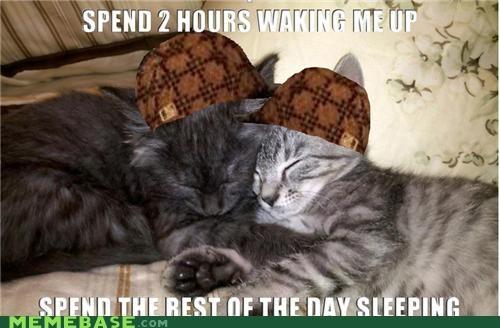 animals cat Memes pets sleeping waking up - 5126292480