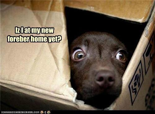 Iz I at my new foreber home yet?