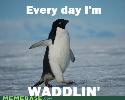 every day,Like a Boss,shuffling,waddling