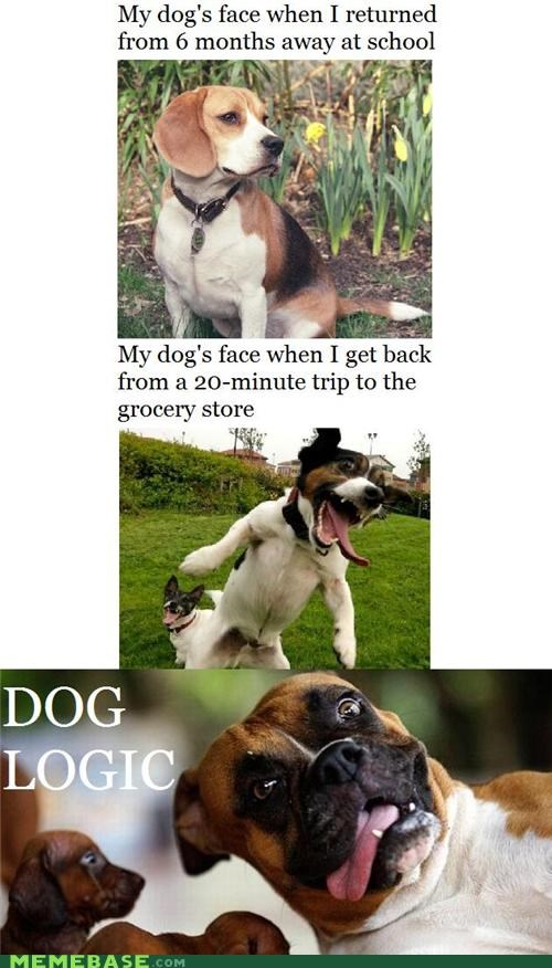 animemes dogs How People View Me logic my face when time - 5127059968