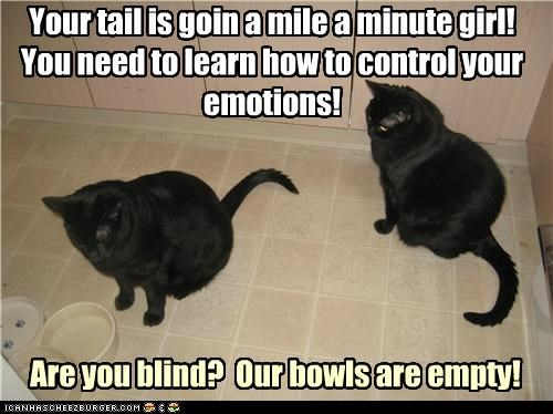 arguing blind bowls caption captioned cat Cats control emotions empty fighting shaking tail upset