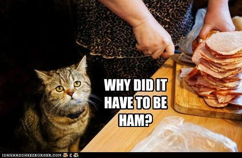 caption,captioned,cat,choice,do not want,ham,upset,why