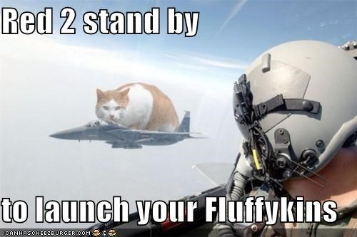 Cats fighter jets I Can Has Cheezburger launch photoshopped wtf - 5127578624