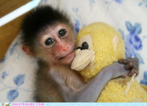 baby,cuddling,equation,Hall of Fame,mandrill,math,monkey,sleepover,slumber party,snuggling,stuffed animal