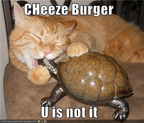 Cheezburger Image 5128696320