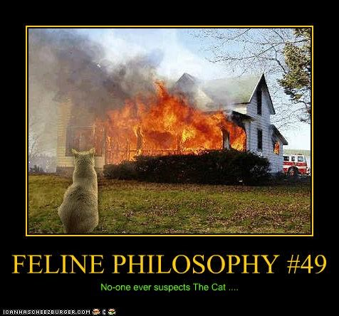 FELINE PHILOSOPHY #49