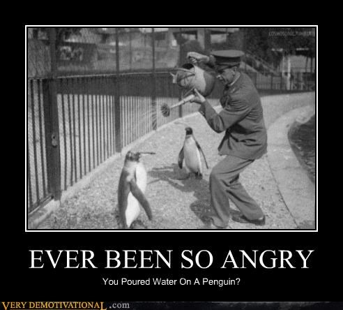 critters,cute,hilarious,penguin,water