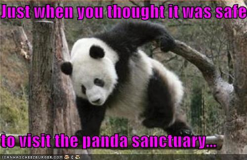 attack,caption,captioned,jumping,just,panda,panda bear,safe,Sanctuary,though,visit,when,you