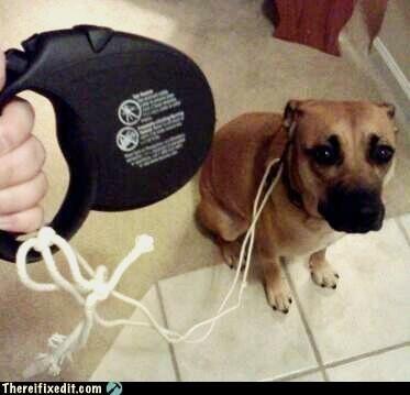animals bad puns leash rope - 5129660672