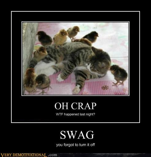 chicks hilarious kitten swag - 5129959680