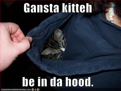 gangster hoods kitten lolcats lolkittehs sleeping - 512996608