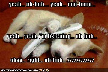 corgi puppy sleeping - 512999168