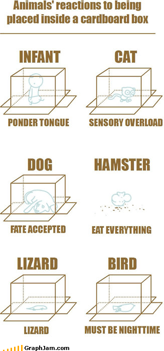 animals,boxes,reactions