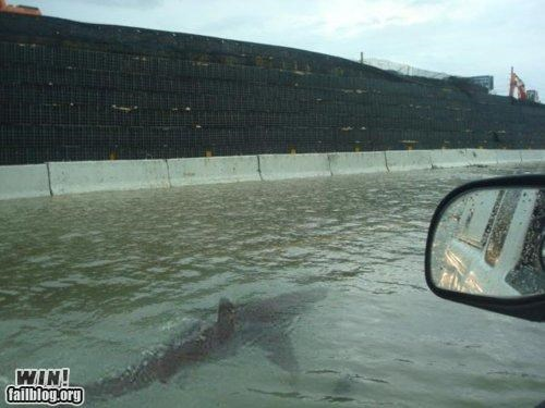 chilling,driving,flood,Hall of Fame,hey there,shark,street