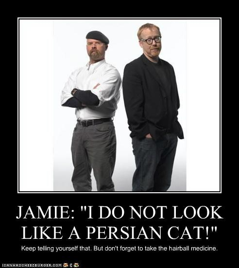 "JAMIE: ""I DO NOT LOOK LIKE A PERSIAN CAT!"" Keep telling yourself that. But don't forget to take the hairball medicine."