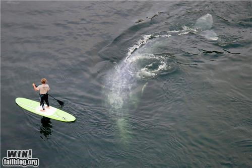 animals encounter ocean surfing whale - 5130796800