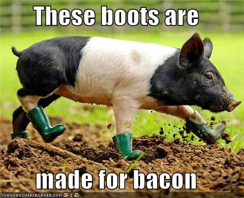 animals,bacon,boots,food,Hall of Fame,I Can Has Cheezburger,lyrics,pig,Songs,these-boots-are-made-for-walkin