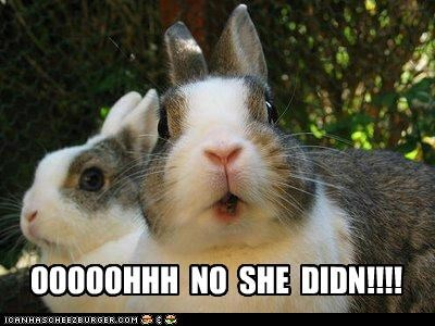 animals bunnies expressions I Can Has Cheezburger oh-no-she-didnt shocked - 5130827008