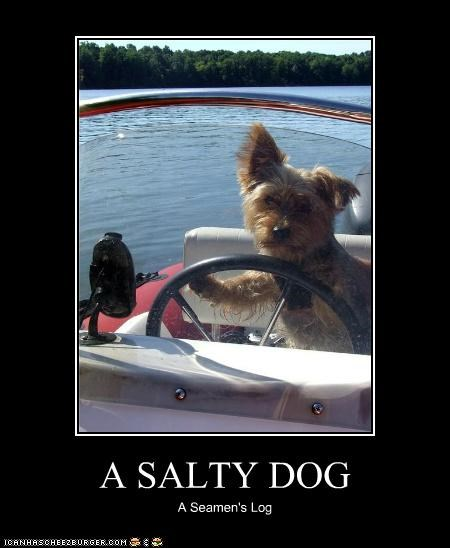 animals boats dogs i has a hotdog salty seaman shanty - 5130851328