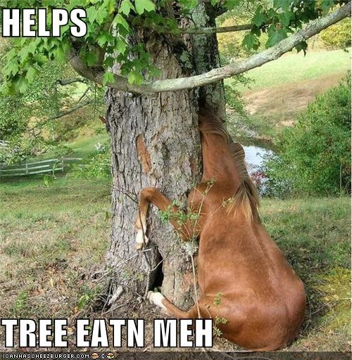 animals,halp,horses,I Can Has Cheezburger,stuck,trees,wat,wtf