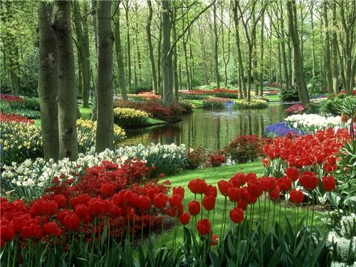 europe,flowers,garden,getaways,Hall of Fame,holland,Keukenhof,Keukenhof Gardens,red,river,trees,tulips,white