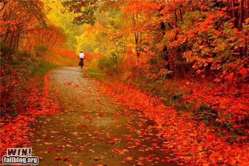 autumn leaves path photography relaxing road trail