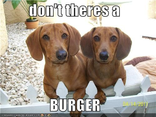 Cheezburger Image 5131069696
