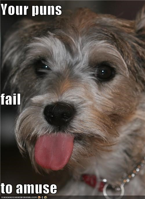 do not amuse FAIL puns terrier tongue whatbreed - 5131105536