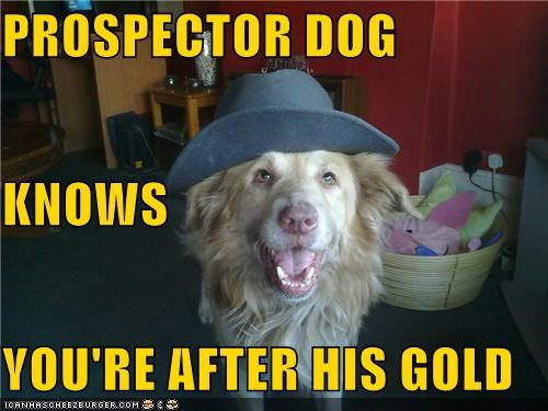 gold golden retriever hat prospector smiling - 5131113216