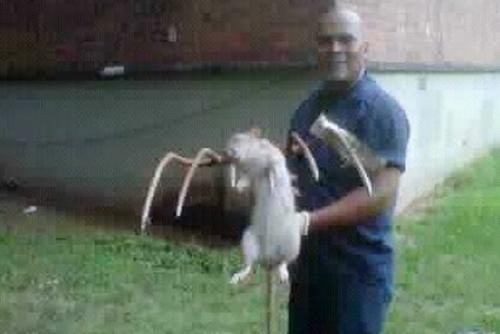Bed-Stuy Gambian pouched rat Kill It With Fire Marcy Houses Nuke It From Orbit - 5131451392