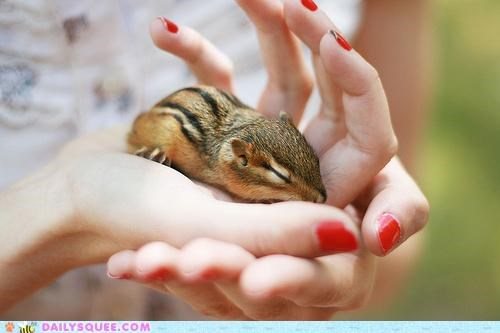 baby cartoons chip and dale chipmunk happy ending rescue rangers rescued thankful touching - 5131643392