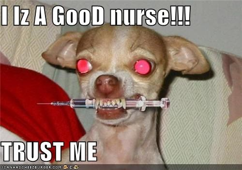 crazy dogs i has a hotdog needles nurses scary syringe wtf - 5132725248