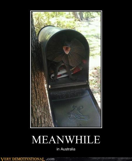 australia,lizard,mail box,Meanwhile,Terrifying