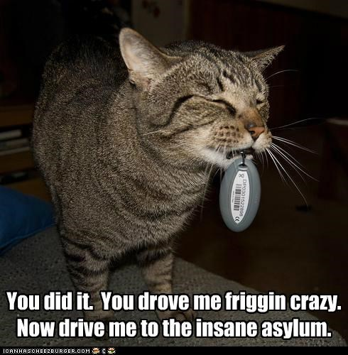 asylum,caption,captioned,cat,crazy,double meaning,drove,insane,keys,pun,success,you did it