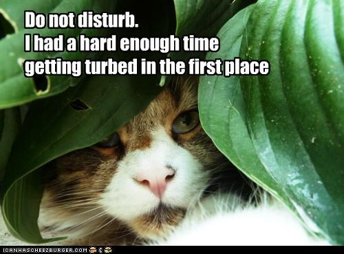 caption,captioned,cat,Disturb,do not disturb,hiding,plant,prefix,pun,request,suffix