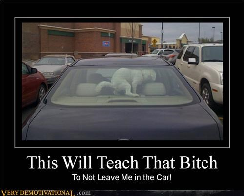 car,dogs,Hall of Fame,hilarious,poop,wtf
