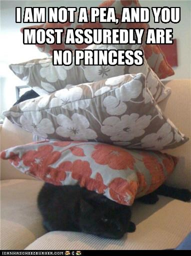 assuredly,caption,captioned,cat,do not want,not,pea,pillows,princess,stack,stacked,unhappy