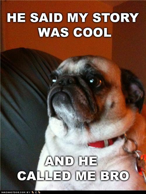 cool story cool story bro meme memedogs pug - 5133838848