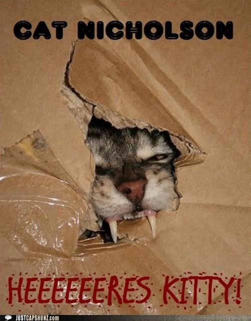 the shining animals boxes Cats I Can Has Cheezburger movies scary teeth - 5133916672