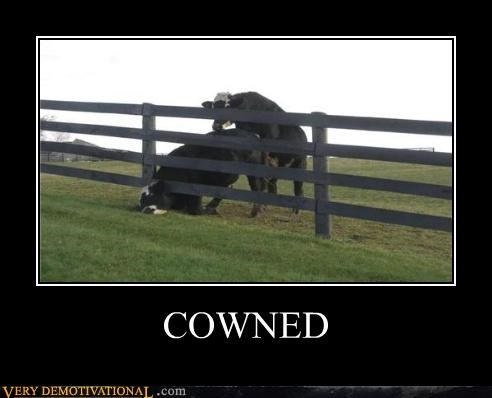 cows FAIL impossible owned pwned - 5133945344
