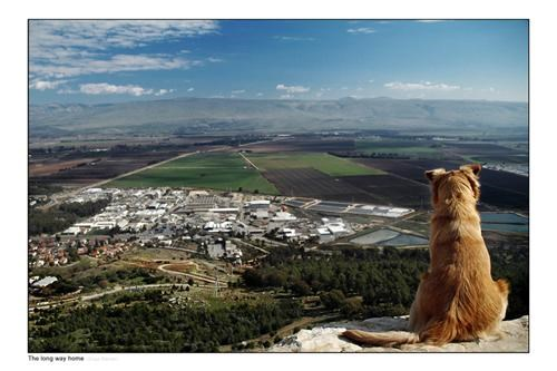 dogs getaways isreal mediterranean southwest asia user submitted - 5134004480