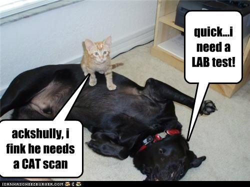 ackshully, i fink he needs a CAT scan quick...i need a LAB test!